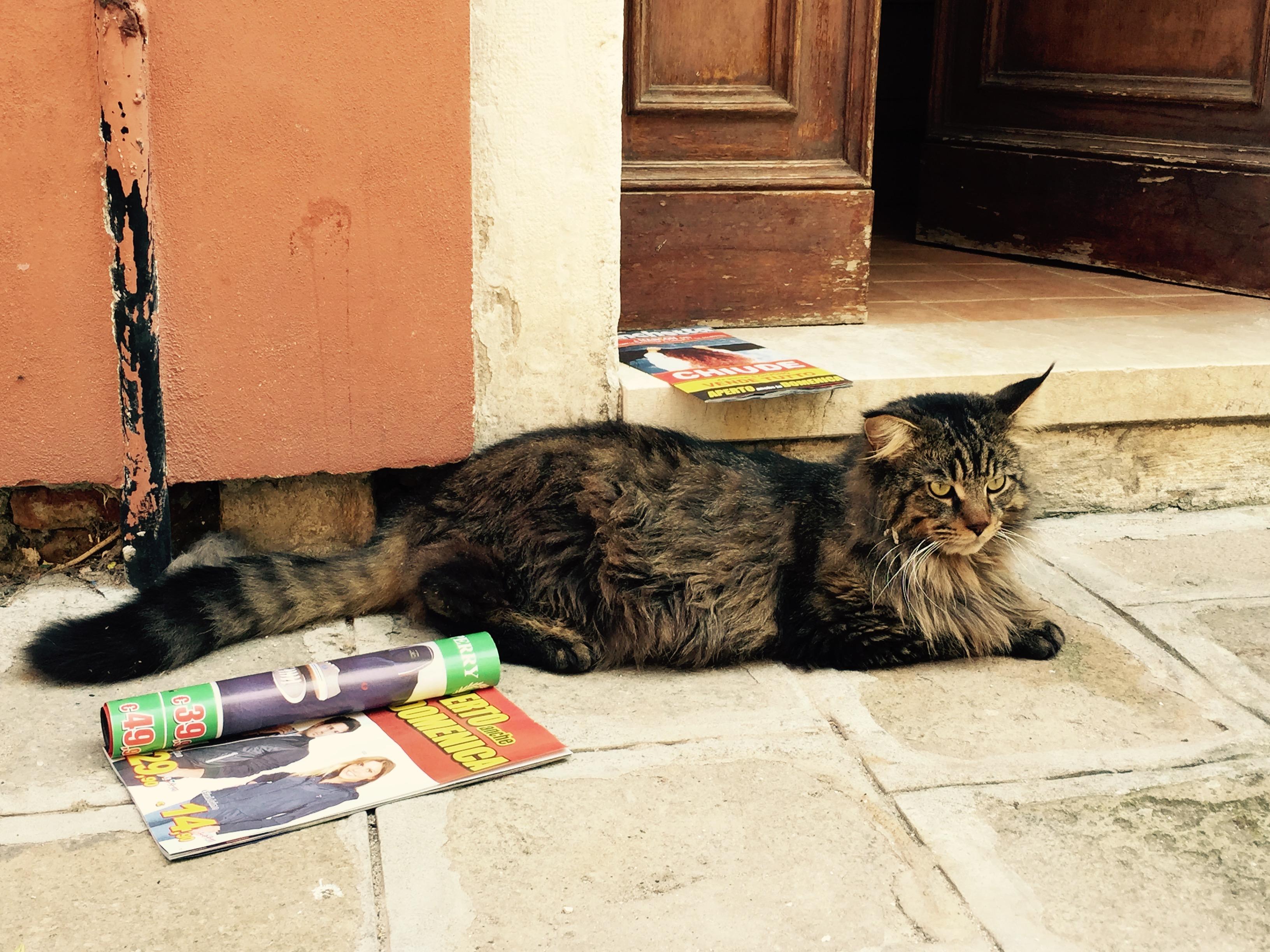 Massive cat, Venice