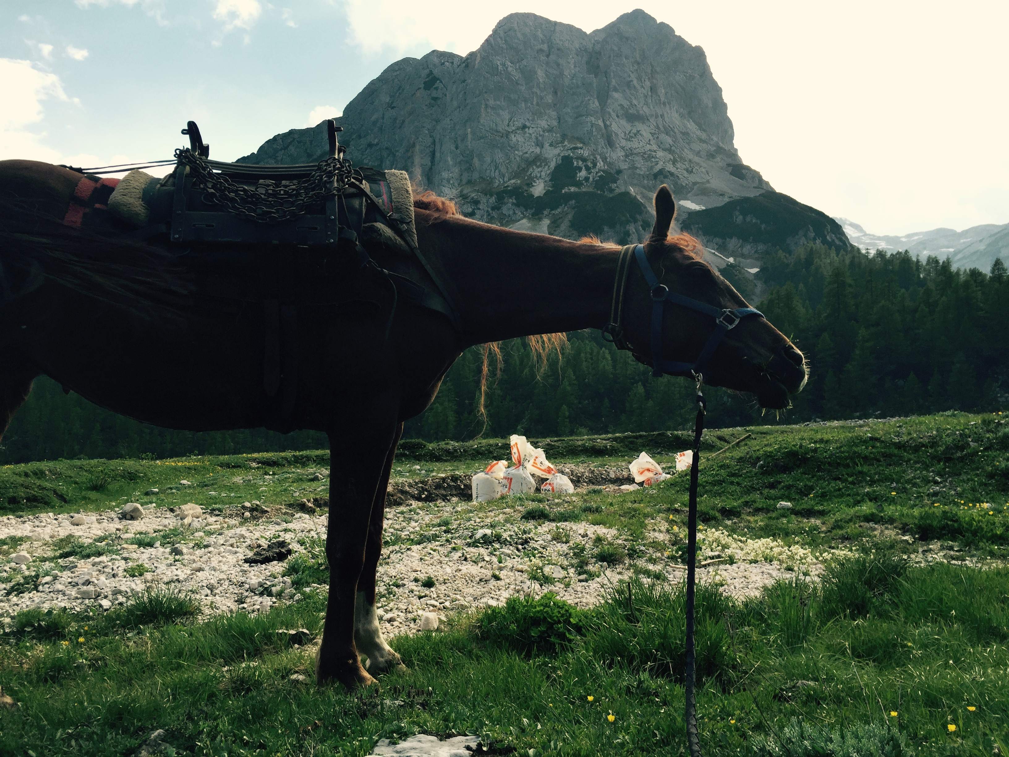 Pack horse with Mišeljski vrh behind, Slovenia